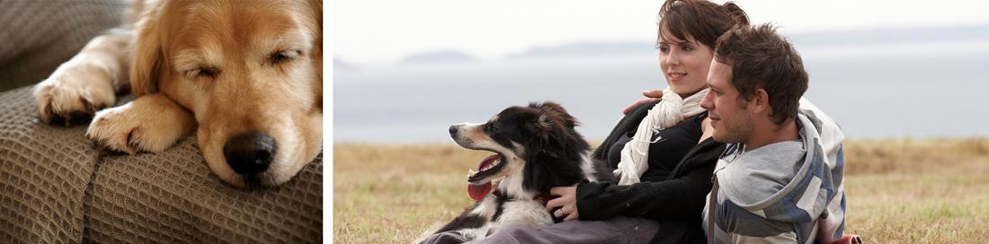 15_HW_601_Urlaub-in-Welt_Urlaub-mit_Hund_1100px_ver02